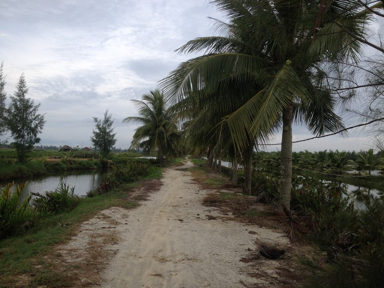 Coconut tree, lake and the road (Tra Que Vegetable Village, Hoi An, Vietnam)