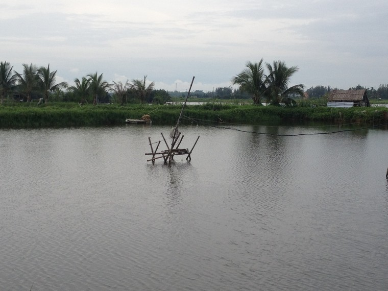 Shrimp farm beside De Vong river (An Bang, Hoi An, Vietnam)