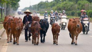 Safe riding in Vietnam